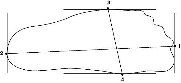 Измерьте длинй стопы между точками 1 и 2, и ширину стопы - между точками 3 и 4